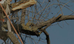 Tree Removal Caulfield