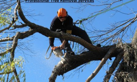 Boroondara Tree Removals