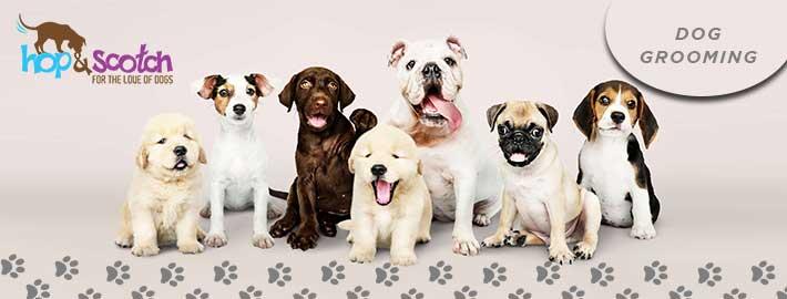 Dog Grooming Boronia