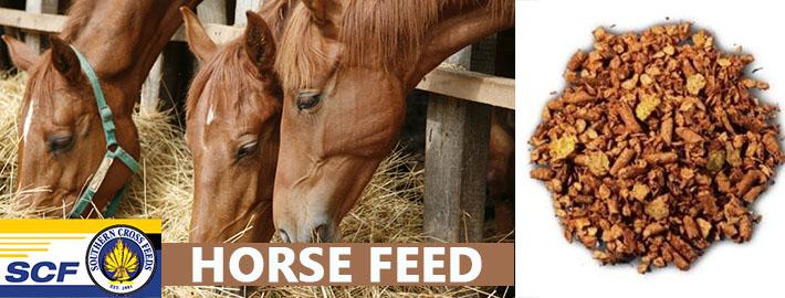 horse feed-1