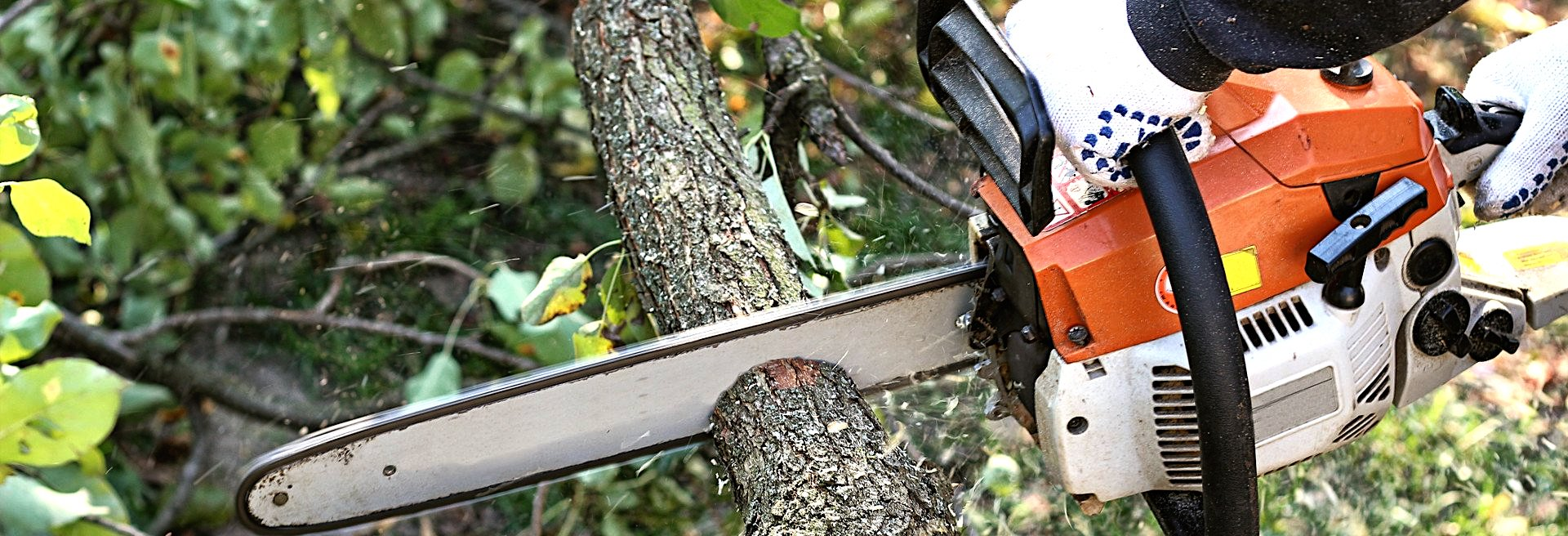 Tree Removal Southern Suburbs Adelaide